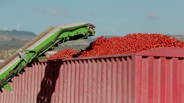 育種レガ ファーム ドライトマト - agricultura点の映像素材/bロール