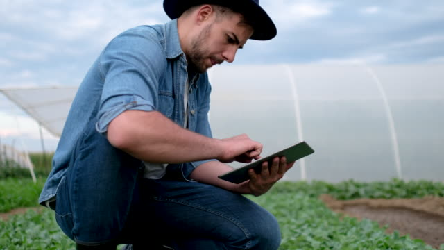 agronomist examining crops before planting - innovazione video stock e b–roll