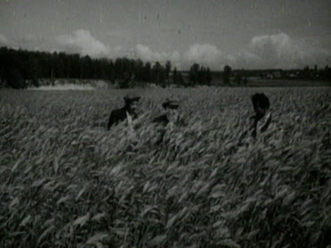 agronomists at work in wheat field - former soviet union stock videos & royalty-free footage