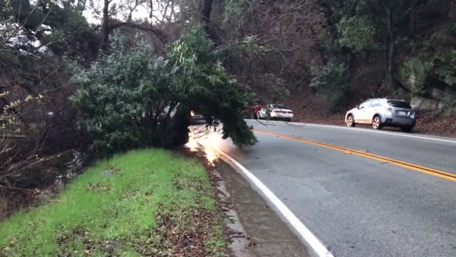 vídeos de stock, filmes e b-roll de agua dulce ca tree down blocking the roadway in agua dulce inside the angeles national forest chp and lacofd blocked roadway for 30 minutes while... - angeles national forest