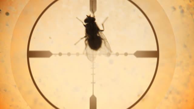 zielen ein walking-fly-hd - totschlag stock-videos und b-roll-filmmaterial