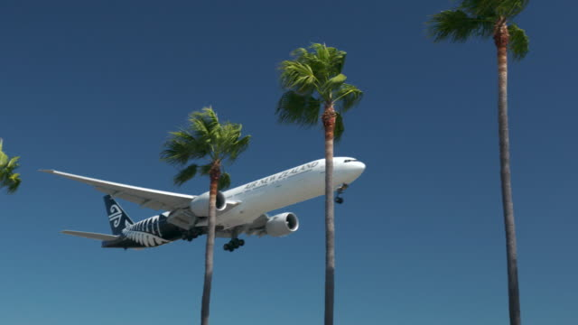 air new zealand - tropical climate stock videos & royalty-free footage