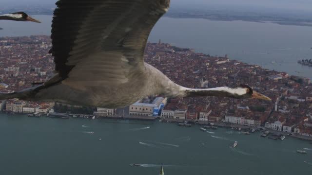 air to air cu pan along common crane flying over venice with st marks in background revealing 2 other cranes flying in formation - クロヅル点の映像素材/bロール