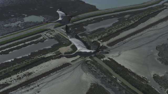 slomo air to air flying with 2 common cranes flying over camargue marshes - 翼を広げる点の映像素材/bロール