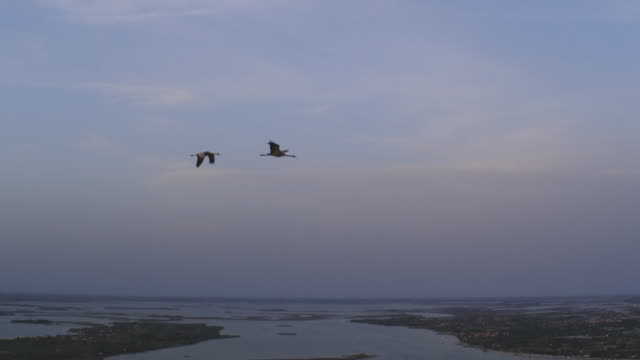 air to air ws la flying with 2 common cranes gliding in clear air  - eurasischer kranich stock-videos und b-roll-filmmaterial