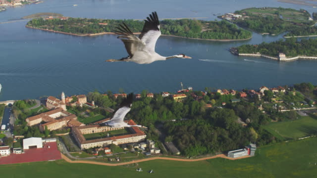 Air to Air WS flying with 2 Common Cranes over bay and revealing Venice in background