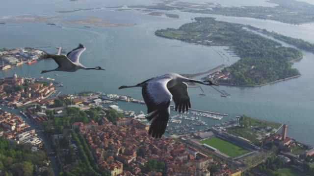 Air to Air MS flying with 2 Common Cranes over Venice and lagoon