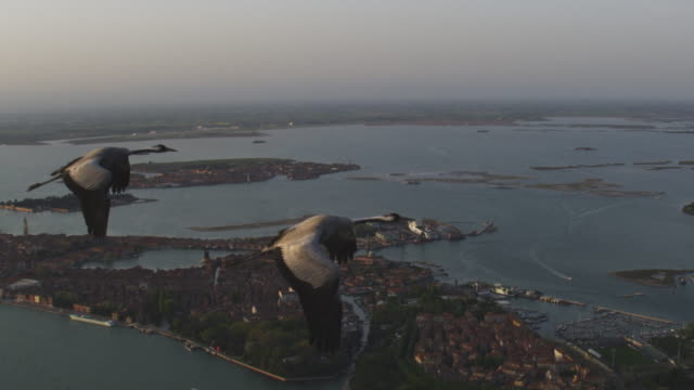 air to air ms flying with 2 common cranes over venice in evening light track in to ms - eurasischer kranich stock-videos und b-roll-filmmaterial