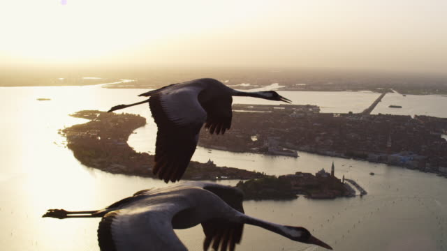 air to air ms flying with 2 common cranes over venice in evening light - eurasischer kranich stock-videos und b-roll-filmmaterial