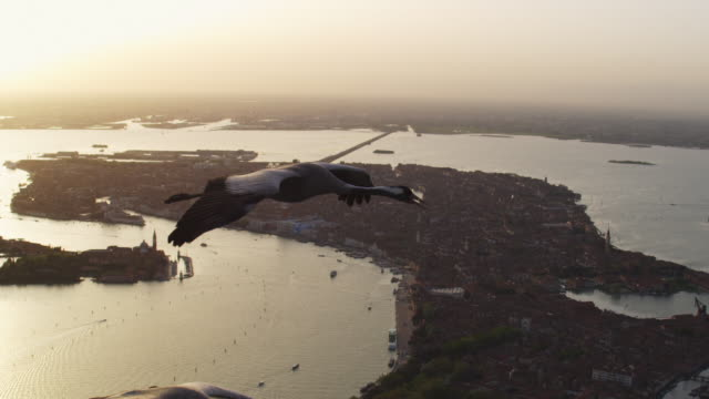 air to air ms flying with 2 common cranes over venice in evening light td from one to other - eurasischer kranich stock-videos und b-roll-filmmaterial