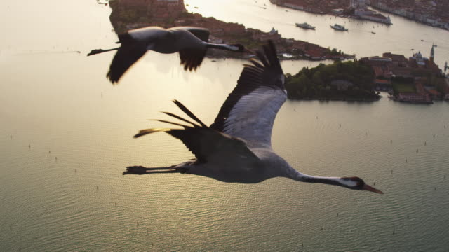 air to air ms flying with 2 common cranes over venice in evening light with sunlight on water in background - eurasischer kranich stock-videos und b-roll-filmmaterial