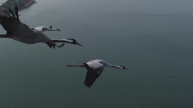 Air to Air MS flying with 3 Common Cranes over Venice and lagoon track in to CU crane then TU to MS second crane
