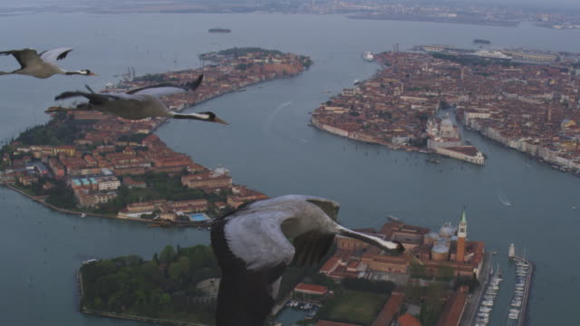 air to air ms flying with 3 common cranes over venice and lagoon  - クロヅル点の映像素材/bロール
