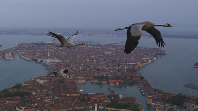 vídeos de stock, filmes e b-roll de air to air ws flying with 3 common cranes over venice and lagoon with st marks in background - três animais