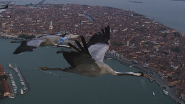 air to air ms flying with 3 common cranes over venice and lagoon with st marks in background - animal wing stock videos & royalty-free footage