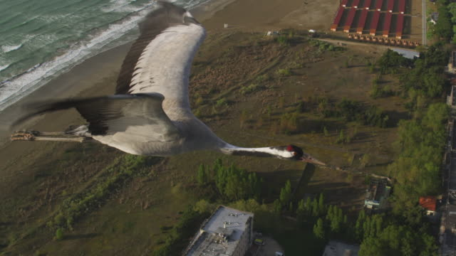 air to air ha ms flying with common crane across coastline  - クロヅル点の映像素材/bロール