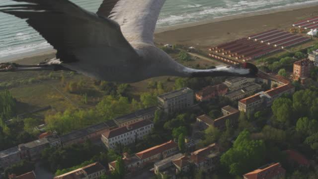 air to air ha cu flying with common crane across coastline  - クロヅル点の映像素材/bロール