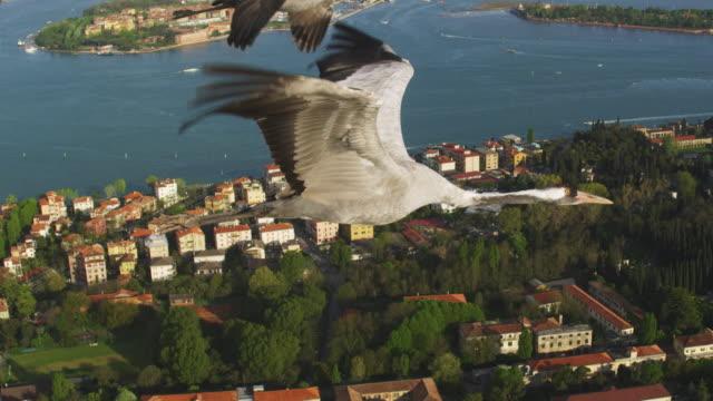 air to air ms flying with common crane along coast at venice  - クロヅル点の映像素材/bロール