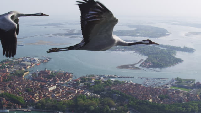 Air to Air LA WS flying with Common Crane TD as second crane joins and reveal lagoon and Venice