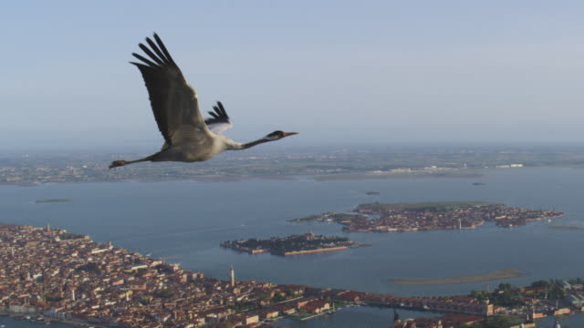 air to air ws flying with common crane looking around over venice - eurasischer kranich stock-videos und b-roll-filmmaterial