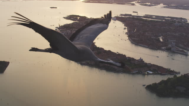 air to air ms td cu flying with common crane over venice in evening light  - eurasischer kranich stock-videos und b-roll-filmmaterial
