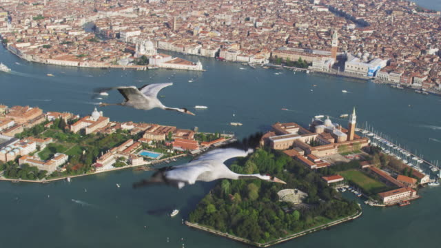 Air to Air WS HA flying with Common Crane over Venice lagoon and city