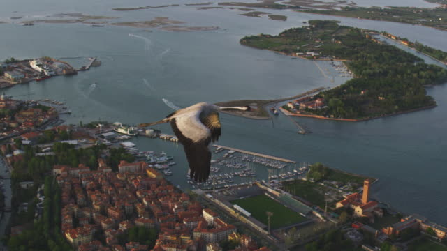 air to air ws flying with common crane over venice lagoon in evening light  - eurasischer kranich stock-videos und b-roll-filmmaterial