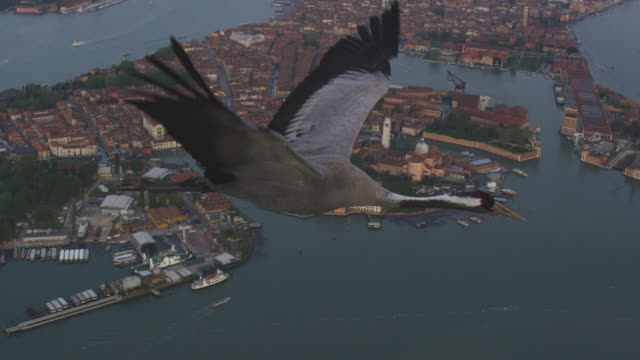 air to air ms flying with common crane over venice with st marks in background - air to air shot stock videos & royalty-free footage