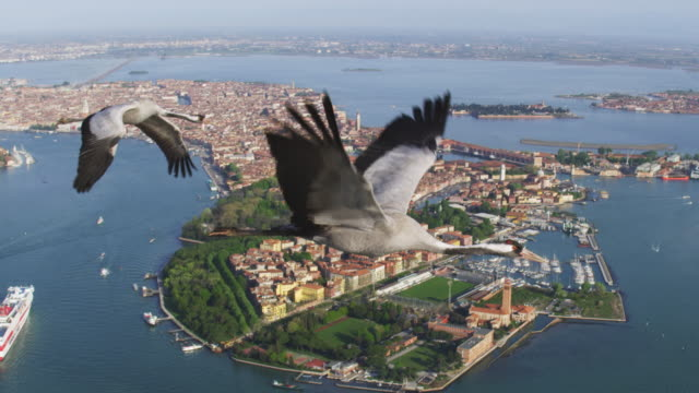 air to air ws flying with common crane over wooded island and bay - eurasischer kranich stock-videos und b-roll-filmmaterial