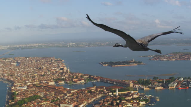 air to air ws la flying with common crane td to rear view and reveal venice in background  - クロヅル点の映像素材/bロール