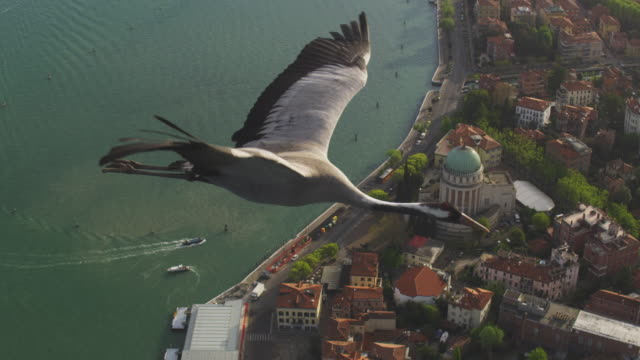 air to air ha ms into cu flying with common crane over coast in evening light  - クロヅル点の映像素材/bロール