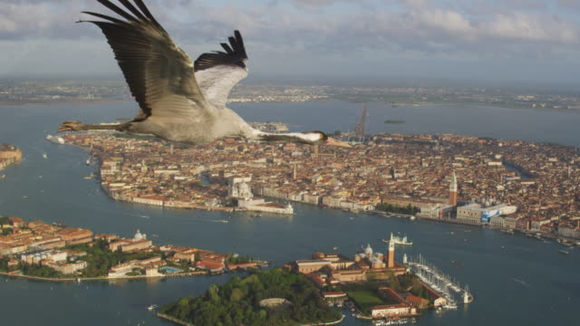 Air to Air MS into CU flying with Common Crane over Venice with cruise ship and St Marks in background PAN to CU second crane very close to camera