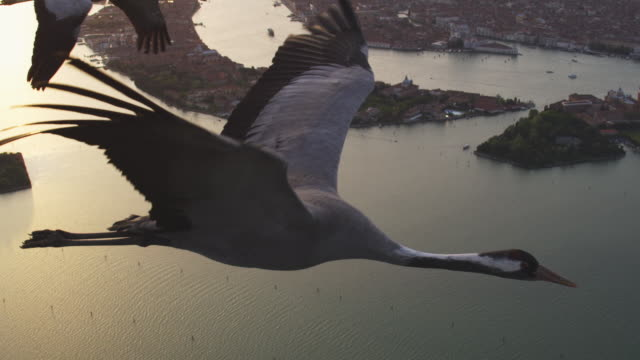 Air to Air MS into CU flying with Common Crane over Venice with St Marks in background in evening light