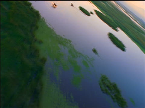 AERIAL aircraft point of view green marshland with horses running thru water / Mexico