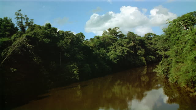 aircraft point of view low over river winding through dense equatorial forest / over canopy / french guiana - french guiana stock videos & royalty-free footage