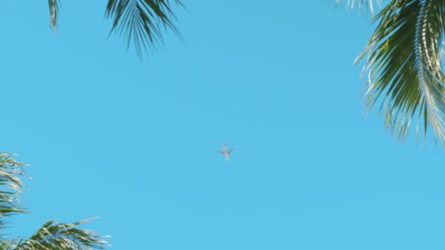 フロリダの美しい日にヤシの木を通り過ぎて飛ぶ飛行機 - ローアングル点の映像素材/bロール