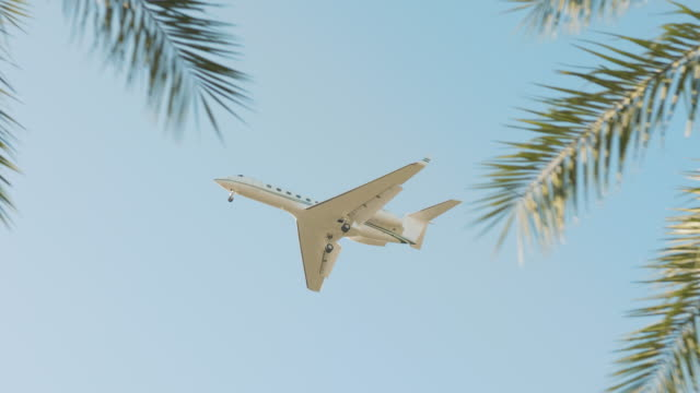 airplane flying past palm trees on a beautiful day in florida - branch plant part stock videos & royalty-free footage
