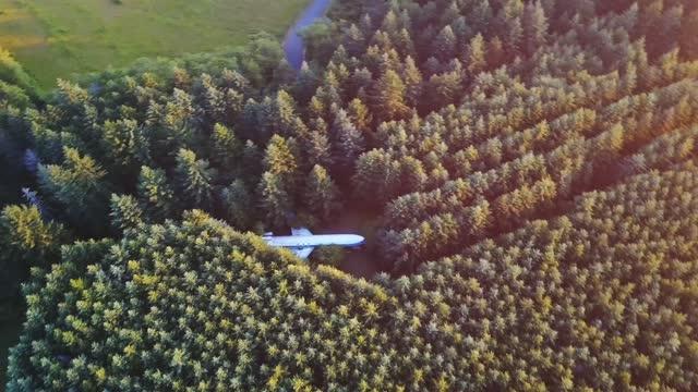 flygplan i skogen - tallträd bildbanksvideor och videomaterial från bakom kulisserna
