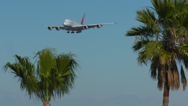 airplane in the palms - tropical climate stock videos & royalty-free footage