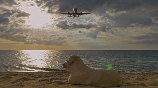 vídeos de stock e filmes b-roll de airplane landing over the dog on beach. - regresso ao lar