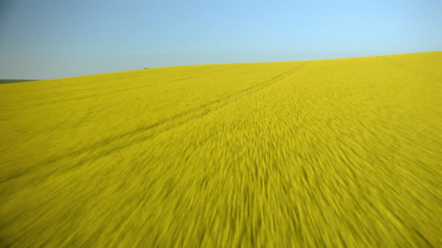 AERIAL airplane point of view fields of yellow oil seed rape / Calais, Normandy, France