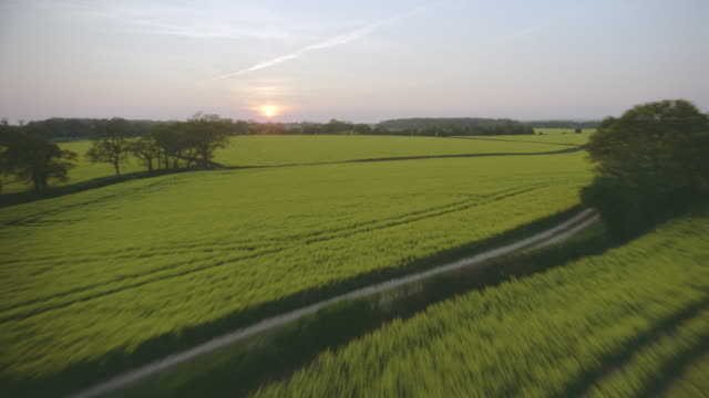 aerial airplane point of view over yellow fields of oil seed rape at sunset / kent, england - twilight stock videos & royalty-free footage