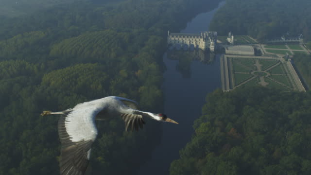 air-to-air ms alongside common crane flying with chateau de chenonceau in background  - eurasischer kranich stock-videos und b-roll-filmmaterial