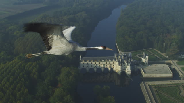 air-to-air ms alongside common crane flying with chateau de chenonceau then rural landscape in background  - eurasischer kranich stock-videos und b-roll-filmmaterial