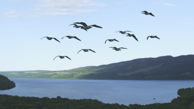 air-to-air slo mo behind group of barnacle geese gliding and flying with sky and loch ness in background - ハイランド地方点の映像素材/bロール