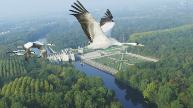 air-to-air flying alongside 3 common cranes with chateau de chenonceau in background  - kamerafahrt auf schienen stock-videos und b-roll-filmmaterial