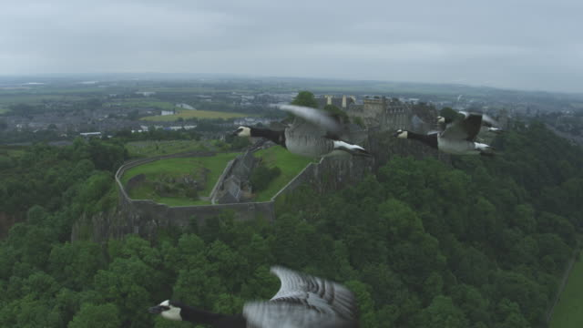 Air-to-air MS flying alongside 4 Barnacle Geese circling Stirling Castle in background