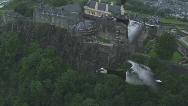 Air-to-air SLO MO MS flying alongside 4 Barnacle Geese with Stirling Castle in background