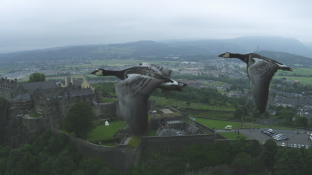 Air-to-air MS flying alongside Barnacle Goose revealing group with Stirling Castle in background