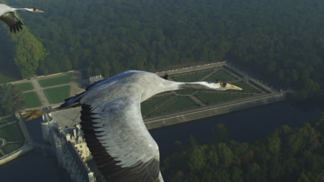 air-to-air cu flying alongside common crane with gardens at chateau to chenonceau in background tu to reveal second crane - 翼を広げる点の映像素材/bロール